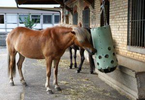 Pferdepflege, Futternetz