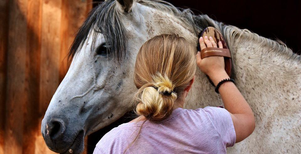 Pferdeputzzeug, Striegeln