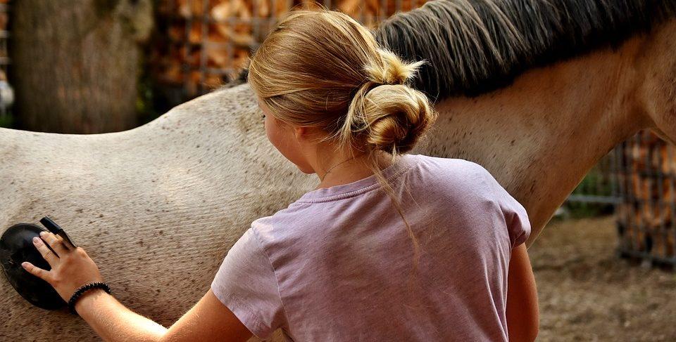 Pferdepflege, Zubehör kaufen