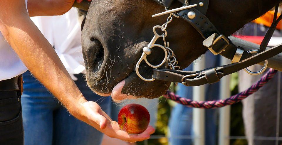 Lerckerlis für Pferde