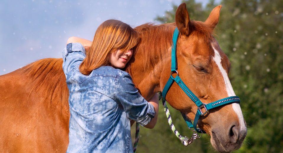 Schmusebürsten für Pferde kaufen